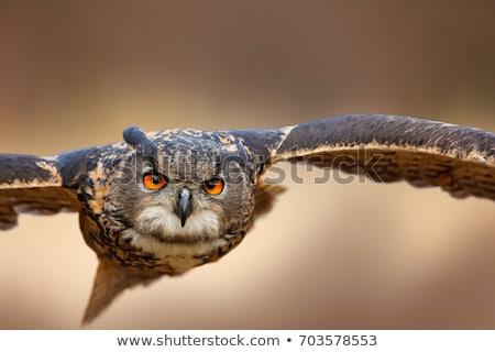 Stockfoto: Blauw · uil · vogel · buit · hart · ontwerp