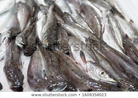 freshly caught hake Stock photo © marimorena