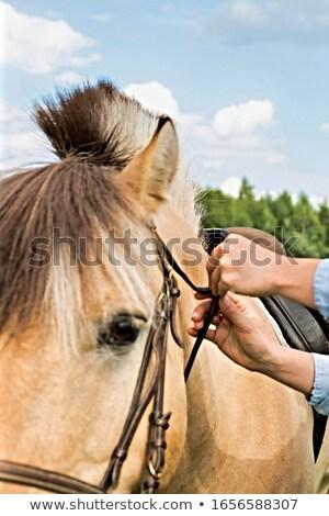 Photo of the woman walking with pony Stock photo © konradbak