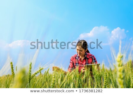 Crops in the agricultural demonstration Stock photo © nalinratphi