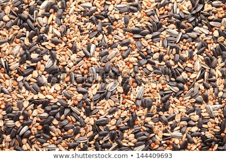 bird seed texture background stock photo © njnightsky