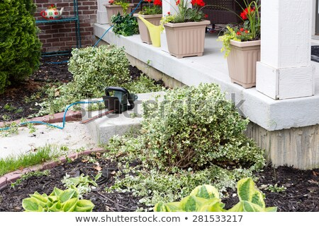 Stock photo: Hedge trimmer being used to trim foliage plants