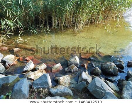 Stock photo: Stony bay with green reeds