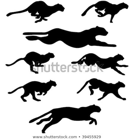 кошки силуэта создают вектора изображение изолированный Сток-фото © Istanbul2009