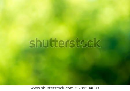 ストックフォト: 抽象的な · 緑 · ぼけ味 · 自然 · 春 · 光