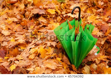 Stock foto: Combined Green Umbrella In Autumn Park Lies On Layer Of The Yellow Fallen Down Maple Leaves