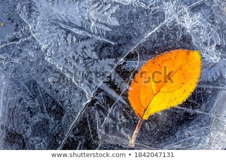 冷たい · 冬 · 葉 · 日本語 · メイプル · ツリー - ストックフォト © vapi