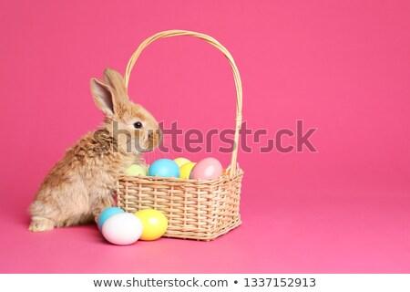 Húsvéti nyuszi fonott kosár aranyos ül szín Stock fotó © orensila