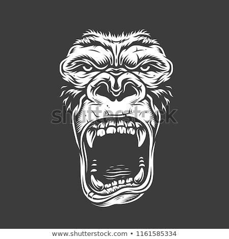 Gorila cara cabeza blanco luz efecto Foto stock © HunterX