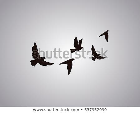 gekleurd · vogels · ingesteld · verschillend · kleuren · computer - stockfoto © derocz
