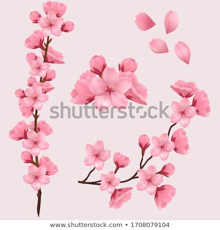 Stock fotó: Virág · sakura · terv · eps · 10 · virágok