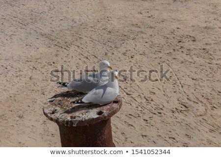 鴎 · ビーチ · 自然 · 光 · 海 - ストックフォト © latent