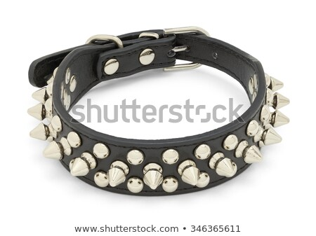 Leather Studded Collar Stock photo © albund