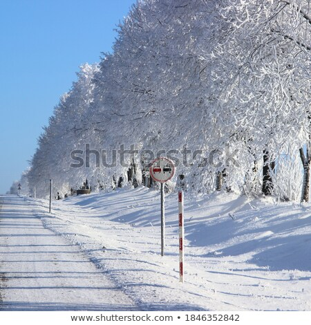 Hoar frost on trees and Stop sign Stock photo © pictureguy