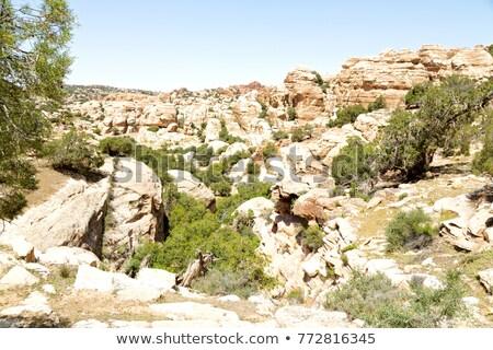 park · tájkép · sivatag · hegy · homok · panorámakép - stock fotó © FreeProd
