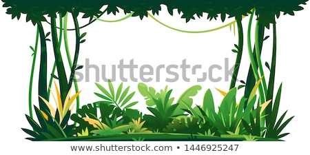 Drzew dżungli Rainforest drzewo drewna charakter Zdjęcia stock © daboost