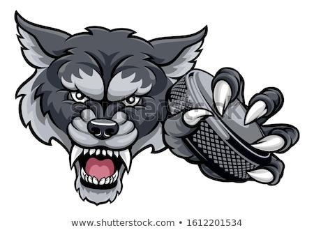 Jégkorong sportok kabala ikon illusztráció fej Stock fotó © patrimonio