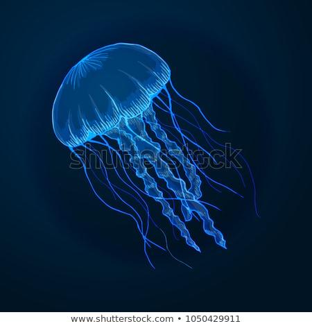 Gelatina pesce illustrazione fiore mare blu Foto d'archivio © colematt