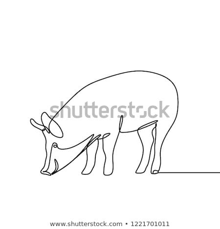 Varken ontwerp boerderijdieren zijaanzicht profiel Stockfoto © FoxysGraphic