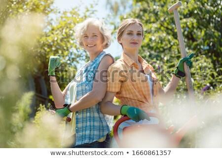 シニア · 女性 · 水まき · 花 · 夏 · 庭園 - ストックフォト © kzenon