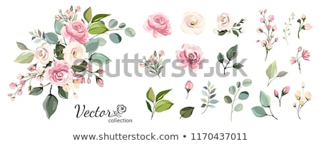 spring foliage and floral elements frame vector stock photo © robuart
