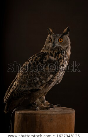 Head shot of Turkmenian Eagle owl / bubo bubo turcomanus isolated on white background   Stock photo © CatchyImages