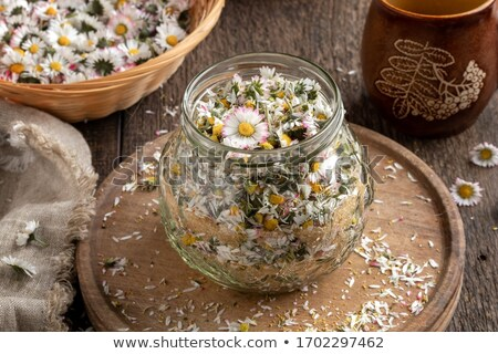 Preparation of common daisy syrup from fresh daisy flowers Stock photo © madeleine_steinbach