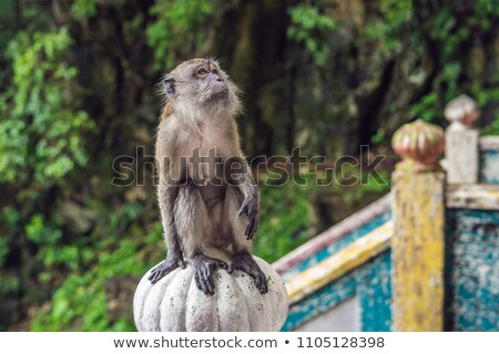 Monkey in Batu Caves, near Kuala Lumpur, Malaysia. Traveling with children concept Stock photo © galitskaya