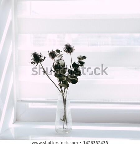 Frescos agujas blanco marco luz Foto stock © artjazz
