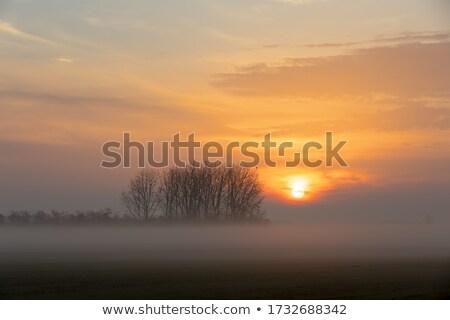 Nebuloso paisagem parque Hungria europa animais selvagens Foto stock © artush