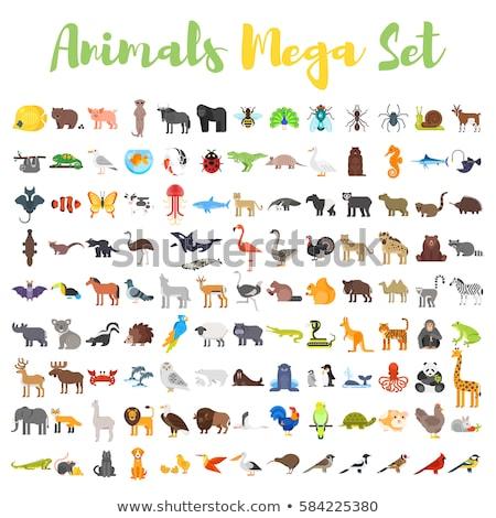 Wild Animals Set Pattern Foto d'archivio © curiosity