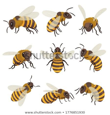 Gestreept bee vliegen insect dier top Stockfoto © pikepicture