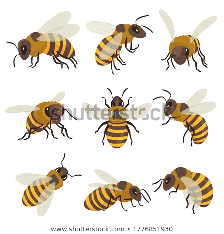 Listrado abelha voador inseto animal topo Foto stock © pikepicture