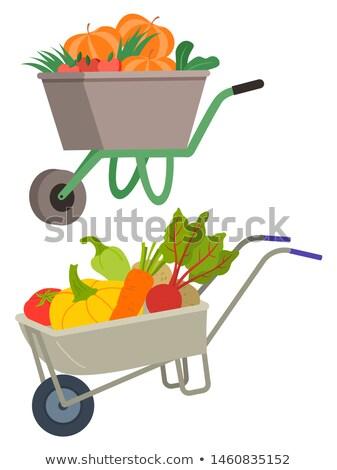 Zöldségek fuvar gazdálkodás vektor izolált szett Stock fotó © robuart