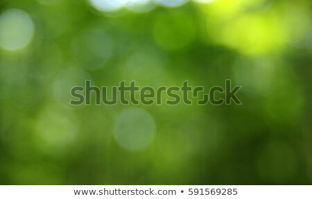 green foliage glowing in sunlight Stock photo © ptichka