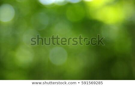 verde · follaje · luz · del · sol · rama · árbol - foto stock © ptichka