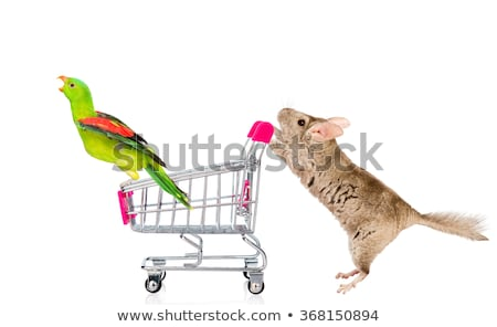 vicces · papagáj · vásárlás · rajzfilmfigura · izolált · fehér - stock fotó © RAStudio