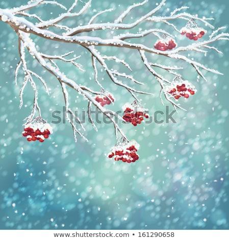 árvore congelada gelo chuva madeira Foto stock © mahout