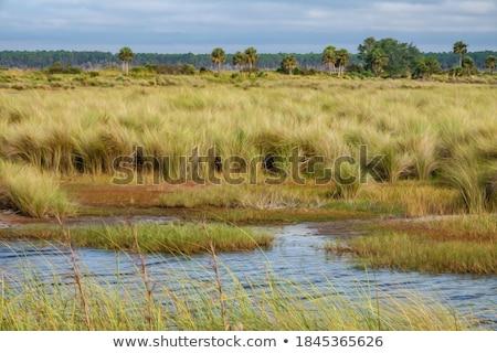 Kust water gras bos natuur bomen Stockfoto © kawing921