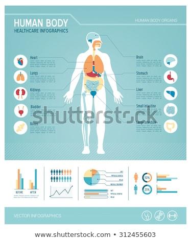 Menselijke lichaam gezonde harten mannelijke vrouwelijke Stockfoto © koqcreative
