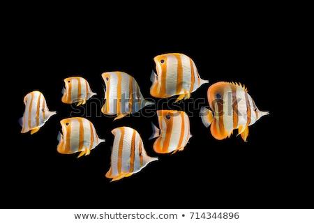 colorful fish swimming underwater stock photo © saddako2