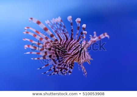 trópusi · Vörös-tenger · víz · nap · természet · óceán - stock fotó © imaster