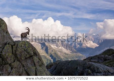 hegy · kecske · égbolt · étel · természet · sivatag - stock fotó © oleksandro