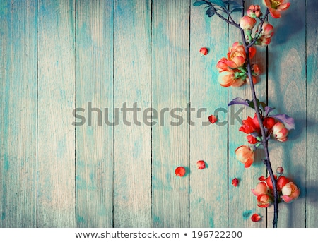 beautiful wooden background with flowers Stock photo © pugovica88