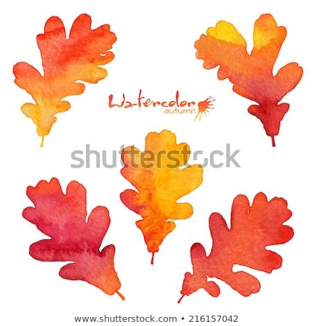 Stock photo: Orange watercolor painted vector autumn oak leaf background