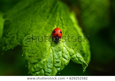 Ladybug on a green leaf Stock photo © Mr_Vector