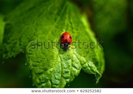 kép · katicabogár · mosoly · levél · nyár · levelek - stock fotó © mr_vector