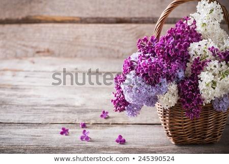 Liliowy kwiaty koszyka piękna świetle liści Zdjęcia stock © -Baks-