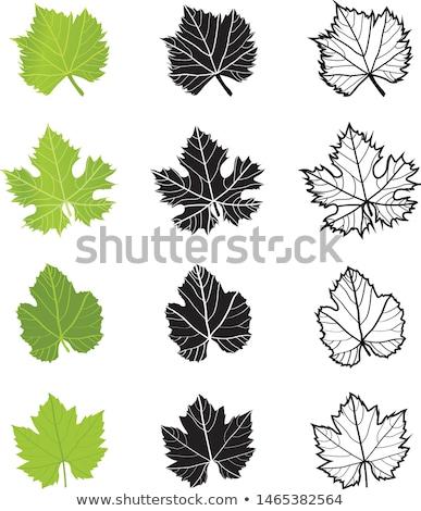 grape leaves vector stock photo © -baks-