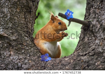 squirrel sitting on the ground eating a nut stock photo © jaffarali
